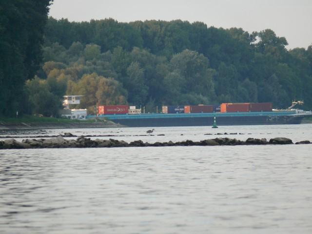 Blick auf eine Rheinbuhne