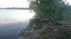 Angeln auf Aal und Wels im Rheinhafen Wörth