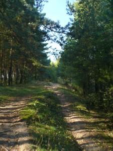 Waldweg entlang der Südseite