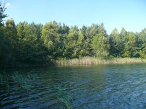 Weitläufige Schilfgürtel und Bewaldung